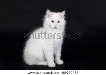 Ragdoll cat on black background - stock photo