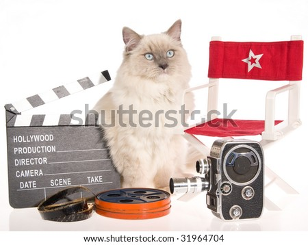 Ragdoll cat with director chair, clapboard, movie reel, camera, on white background - stock photo