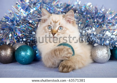 Ragdoll kitten playing with Christmas baubles and decorations - stock photo