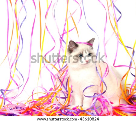 Ragdoll kitten playing with colorful streamers for party or celebration - stock photo