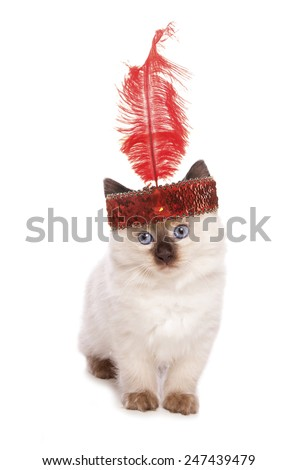 Ragdoll kitten with a flapper girl headband cutout - stock photo