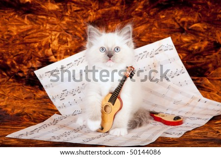 Ragdoll kitten with miniature harp and music sheets - stock photo