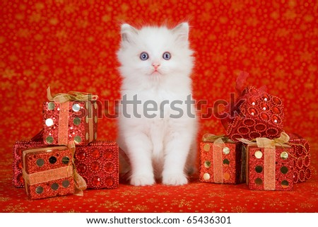 Ragdoll kitten with red Christmas gifts - stock photo