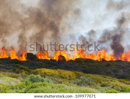 Raging bush fire across the horizon - stock photo