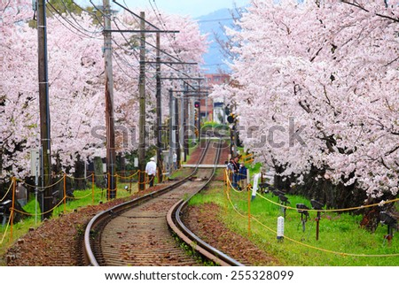 Railway with sakura tree - stock photo