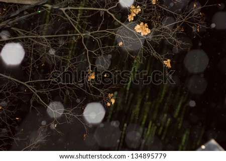 Rain abstract background with branch - stock photo
