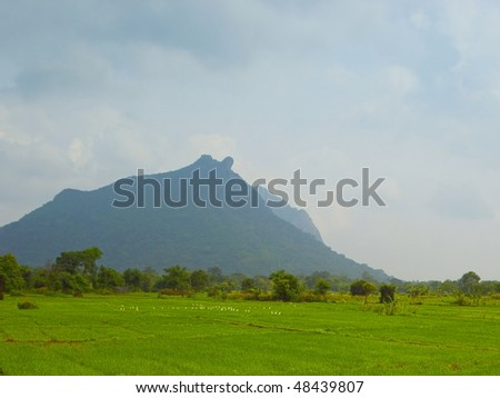 rain clouds gathering over rice paddies and dramatic mountains near anuradhapura in sri lanka - stock photo