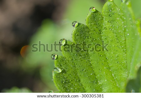Rain drop on a leaf close up - stock photo