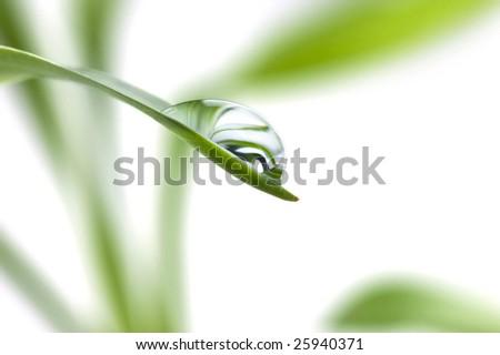 Rain-drop on the the fresh leaf, selective focus - stock photo