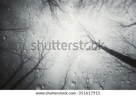 rain drops in forest - stock photo
