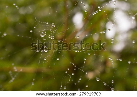 Rain Drops on a Spider Web