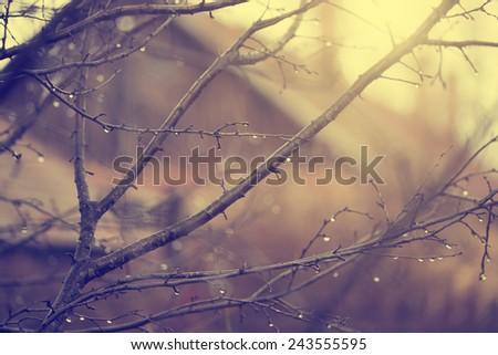 Rain drops on branch - stock photo