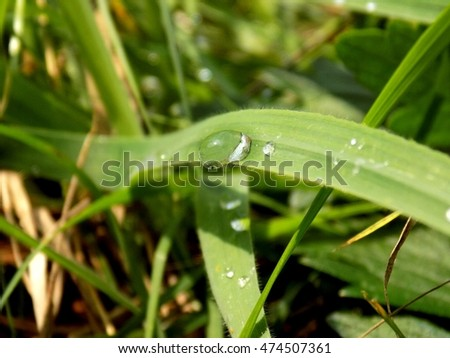 Rain drops on grass blade after rain