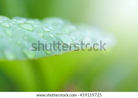 Rain drops on leaf background .