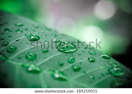 Rain drops on leaf. Macro shoot - stock photo