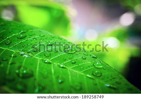 Rain drops on plant. Macro shoot - stock photo