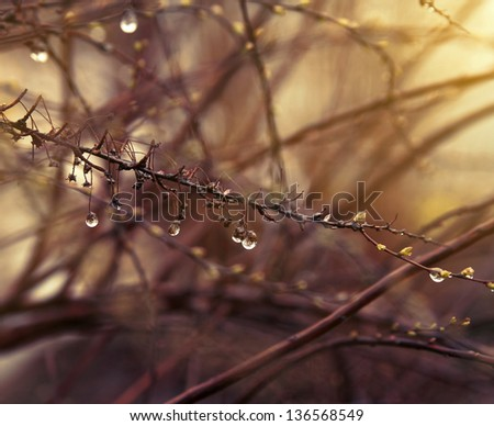 Rain drops on the branches.Nature background. - stock photo