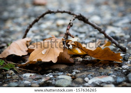 Rain drops on the oak leaf - stock photo