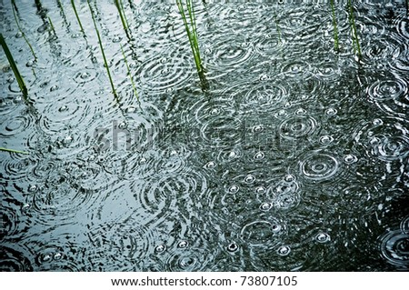 Rain falls and splashes on a lilly pond