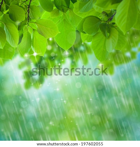 rain falls in tropical deep forest. - stock photo