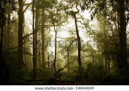 rain forest - stock photo