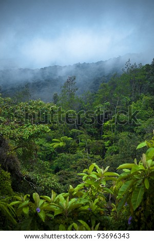 Rain Forest - stock photo