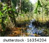 Rain - forest, Amazon - Brazil - stock photo