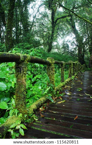 Rain forest and Forest Trail at Doi intanon,Chiang Mai Province, Thailand