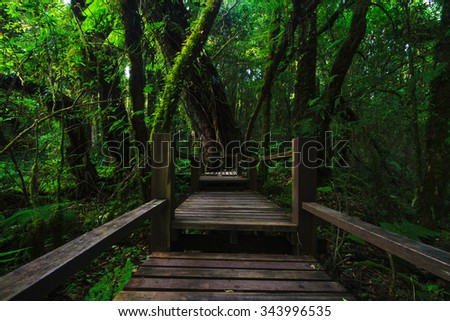 Rain forest at Doi intanon (Chiang Mai province Thailand) - stock photo