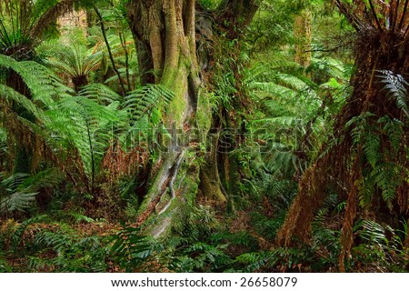 Rain forest, Australia - stock photo
