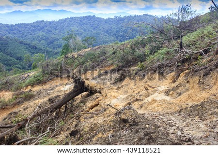 Rain forest destroyed to make way for oil palm plantations in Borneo, Malaysia. Environmental issue. - stock photo