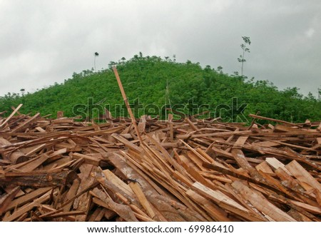 Rain forest destruction in Africa - stock photo