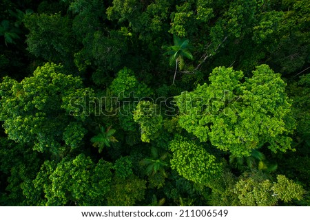 Rain forest from air near Kuranda, North Queensland, Australia - stock photo