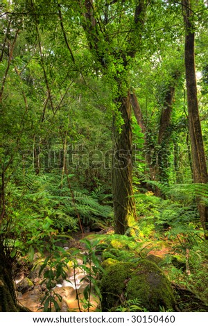 Rain forest - Hawaii. HDR photo