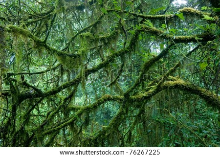 Rain forest in rainy day at Doi Intranon National park at North of Thailand. - stock photo