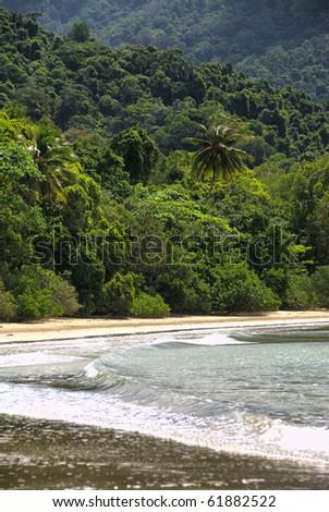 rain forest meets Coral Sea, beach scenery at Cape Tribulation - stock photo