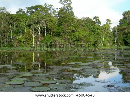 Rain Forest mirrored in a lagoon with lillies, on Rio Negro in the Amazon River basin, Brazil, South America - stock photo