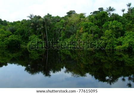 Rain forest mirrored in waters, on Rio Negro in the Amazon River basin, Brazil, South America - stock photo