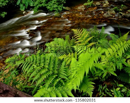 Rain Forest Stream - stock photo