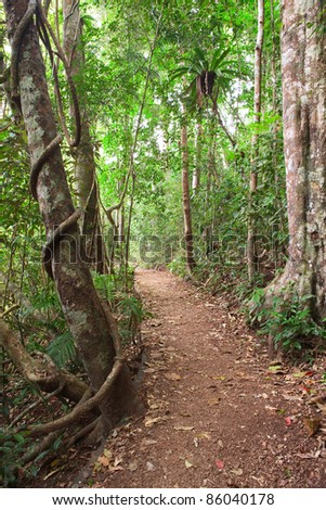 Rain forest trail tablelands Queensland Australia tropical jungle path near crater lake Eacham