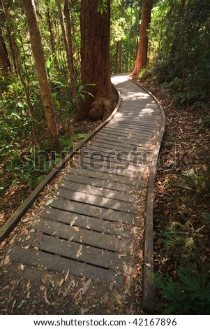 Rain forest walkway in the GlassHouse Mountains Queensland Australia