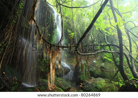 rain forest waterfall