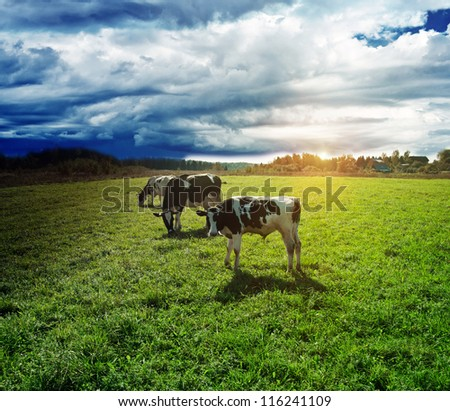 Rain goes to pasture. Summer bad weather - stock photo