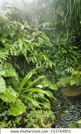 rain in tropical forest - stock photo