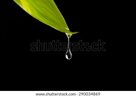 Rain Water Drop to Green Leaf - stock photo