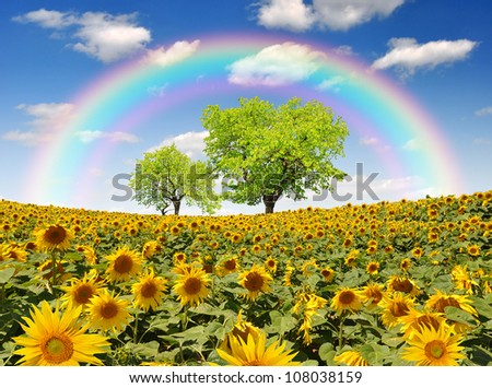 rainbow above the sunflower field with tree - stock photo
