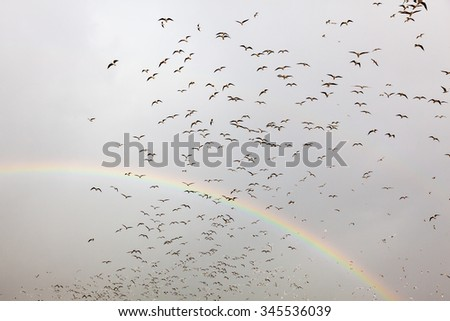 Rainbow Birds. A lot of gulls are flying in surrealistic way making fantastic arc in the grey sky with full rainbow on the background