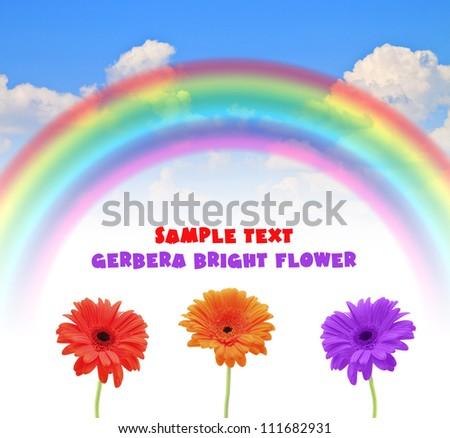 rainbow blue summer sky flower Gerber - stock photo