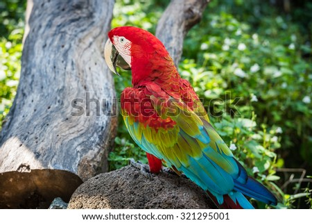 Rainbow bright colorful parrot sits on a rock in the forest - stock photo