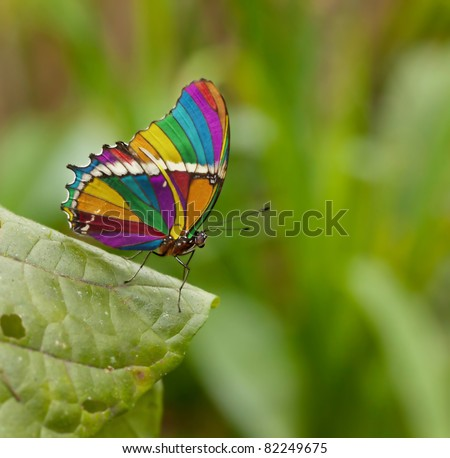 rainbow butterfly - stock photo